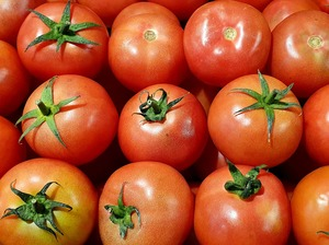 Tomate Pink