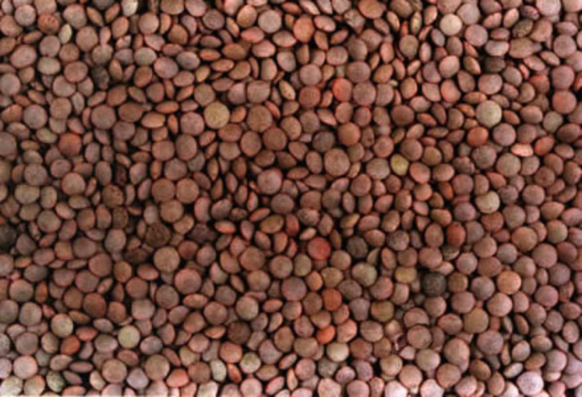 Lenteja de Salamanca seca a granel
