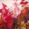 Centro de flor silvestre