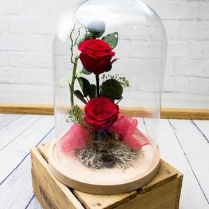 Cupula rosas preservadas Grande