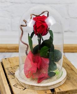 Cupula rosas preservadas