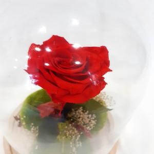 Cúpula de cristal con rosa preservada