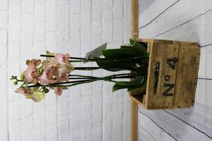 Orquídea natural