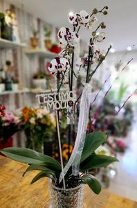 Orquídea blanca con pintas moradas