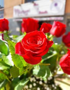 Ramo de 9 Rosas rosas