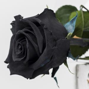 Rosa preservada Tallo largo Negra