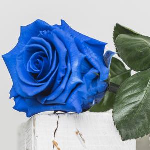 Rosa preservada Tallo largo azul