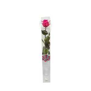 Rosa preservada varios colores