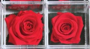 Rosa Preservada metacrilato