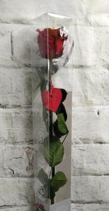 Rosa roja preservada en caja - GRANDE