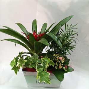 Centro de plantas pequeño