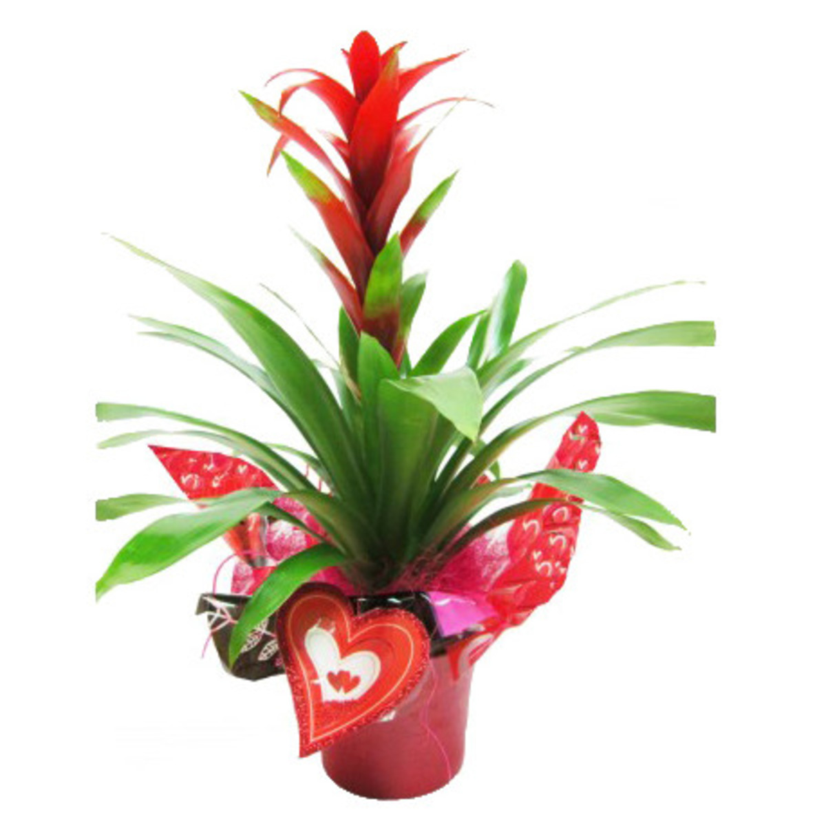 Cupido planta interior